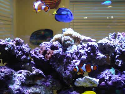 crystal fish aquarium - photo #38