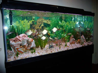 aquariums ct crystal clean aquariums fresh water photos freshwater aquarium 400x300